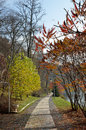 Autumn park a parkway goes by the pond trees and shrubs in the garden Royalty Free Stock Photos