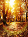 Picture : Autumn park path   smiling