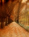 Autumn park scenery in a with golden trees and fallen leaves on the alley Stock Photos