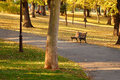 Autumn park scenic at sunny day trees and leaves on grass kalemegdan serbia Royalty Free Stock Images