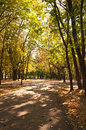 Autumn in park sunny day outdoor Royalty Free Stock Photos
