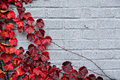 Autumn Partial Border Design - Red Grape Leaves