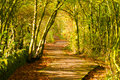 Autumn path Royalty Free Stock Image