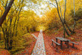 Autumn path in the forest Royalty Free Stock Photos