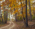 Autumn pathway beautiful through the forest during Royalty Free Stock Photos