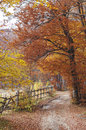 Autumn pathway in surrounded by beautiful red and yellow trees Stock Photography