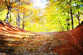Autumn photo of landscape with park Royalty Free Stock Images