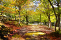 Autumn photo of landscape with park Royalty Free Stock Photography