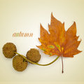 Autumn picture of a dried leaf and some platanus seed balls and the word written on a beige background with a retro effect Royalty Free Stock Photography