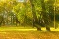 Autumn picturesque tree in sunny autumn park lit by sunlight -autumn tree in sunshine Royalty Free Stock Photo