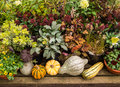 Autumn plants garden display a variety of colourful seasonal on in a centre Royalty Free Stock Photo