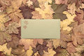 Autumn postcard blank greenish envelope surrounded by leaves Royalty Free Stock Image