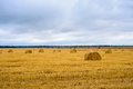 Autumn prairie Royalty Free Stock Photo