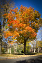 Autumn at Princeton Stock Image
