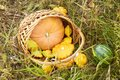 Autumn. Basket vegetables. Pumpkin. Watermelon. Grass. Glade Royalty Free Stock Photo