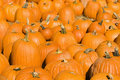 Autumn pumpkins. Stock Photo