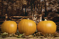 Autumn pumpkins with fall leaves against forest with gate in the background Stock Photography