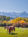 Autumn on the ranch horse pasture at double rl with a view of dallas divide back Royalty Free Stock Images