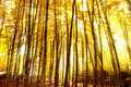 Autumn rays Royalty Free Stock Photo