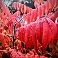 Autumn red colours Royalty Free Stock Photo