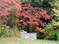 Autumn reds colourful bushes in the fall Royalty Free Stock Photography