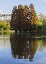 Autumn reflection another shot and beautiful in the park at lake titan bucharest Royalty Free Stock Photo