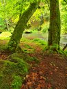 Autumn river bank fresh green mossy stones colorful fall and boulders on covered with leaves from maples beeches or aspens Stock Photo