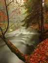 Autumn river in forest. Bended tree above water level Royalty Free Stock Photo