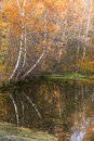 Autumn river nice view of forest near with reverberation good background Stock Image