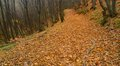 Autumn road in forest this is colorful caucasus Royalty Free Stock Photo