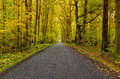 Autumn road winding in forest Royalty Free Stock Photo