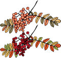Autumn rowan berry branch Stock Image