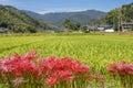Autumn rural scenery Royalty Free Stock Photo