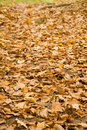 Autumn in Russia Royalty Free Stock Photography