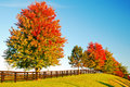 Autumn`s changing colors Royalty Free Stock Photo