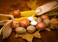 Autumn's harvest Stock Image