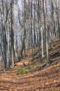 Autumn's Wooded Trail Royalty Free Stock Photo