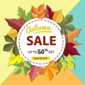 Autumn sale banner with colorful fall leaves Royalty Free Stock Photo
