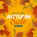 Autumn sale banner, 3d paper colorful tree leaves on yellow background. Autumnal design for fall season sale banner, special offer Royalty Free Stock Photo