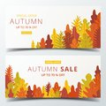 Autumn sale banner layout template decorate with forest in warm