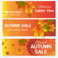 Autumn sale banner season leaf card nature background design vector illustration