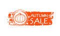 Autumn sale drawn banner with pumpkin and fall leaves orange text business concept Stock Image