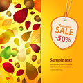 Autumn sale label and background with acorn panel sample text Stock Images
