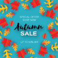 Autumn Sale Paper Cut leaves. September flyer template. Space for text. Origami Foliage. Oak. Circle Fall leaf poster