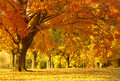 Autumn scene Royalty Free Stock Photos