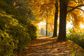 Autumn scene with colorful trees Royalty Free Stock Photo