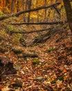 Autumn Scene - 4