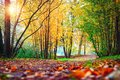 Autumn scene in park. Landscape of colorful autumn. Fall nature on sunset Royalty Free Stock Photo