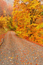 Autumn scene of road with leaves Royalty Free Stock Image