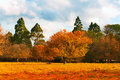 Autumn scenery Stock Photo